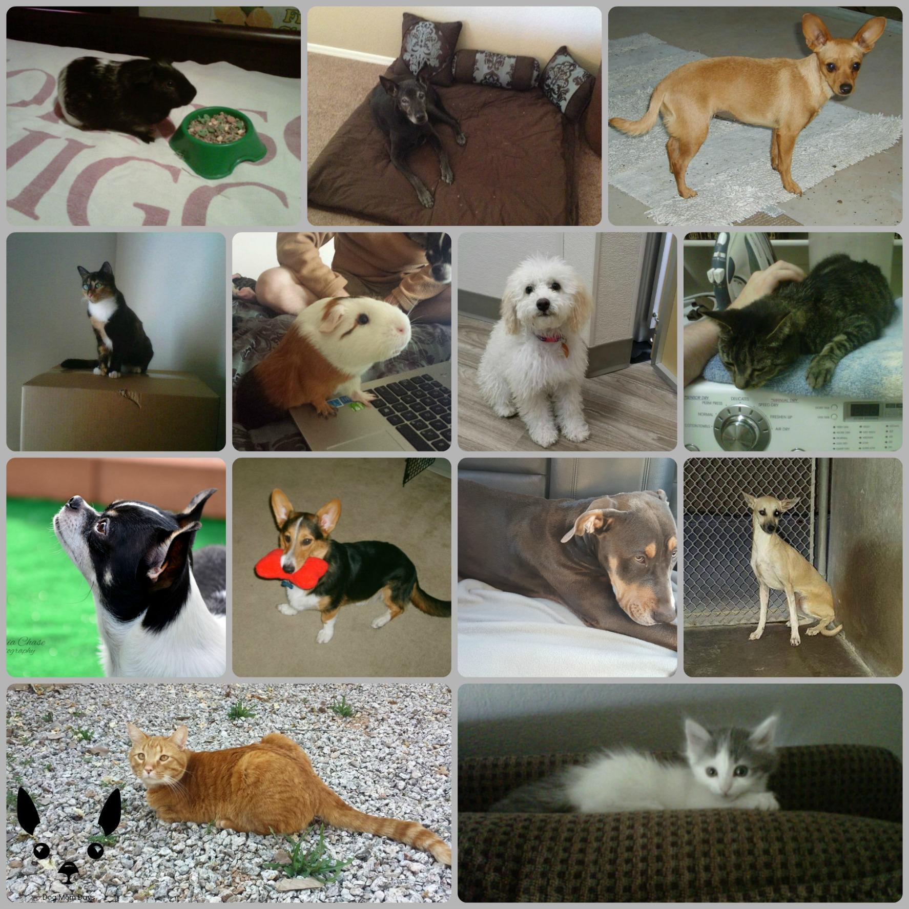 animals Nov 2015