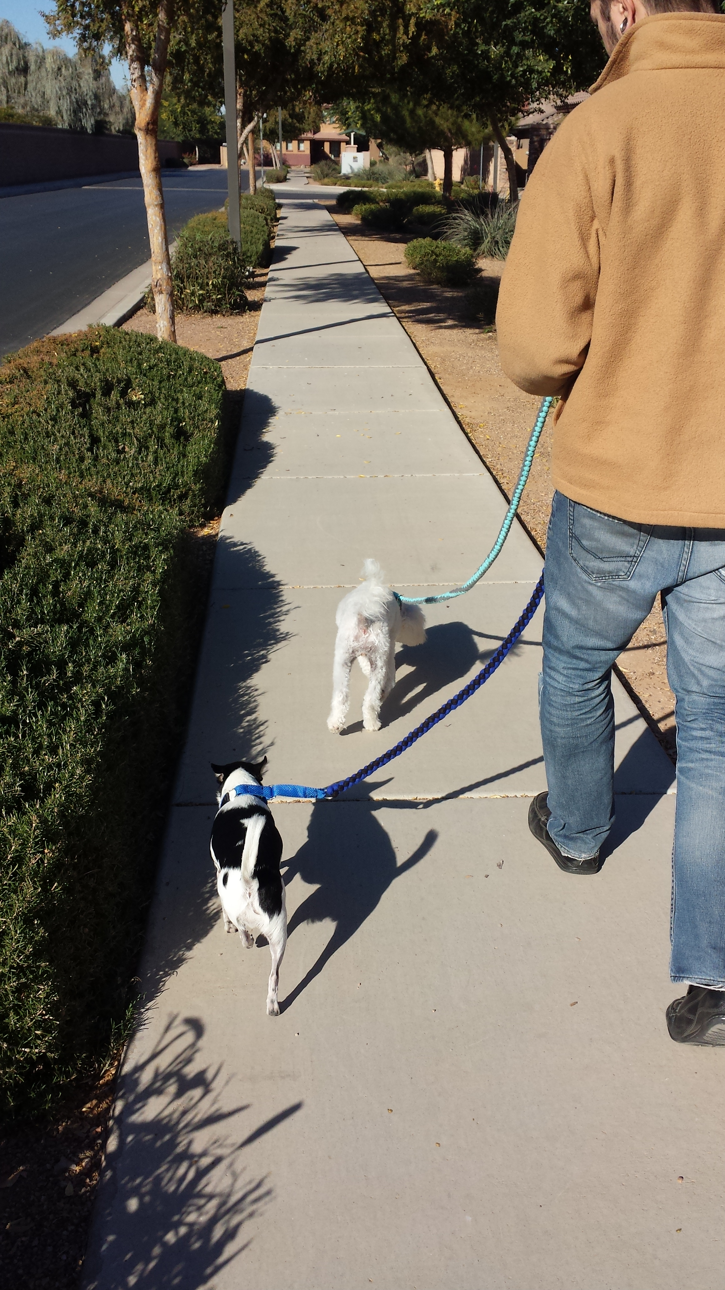 Wynston and Khloee on a walk with their Action K9 Apparel Leashes