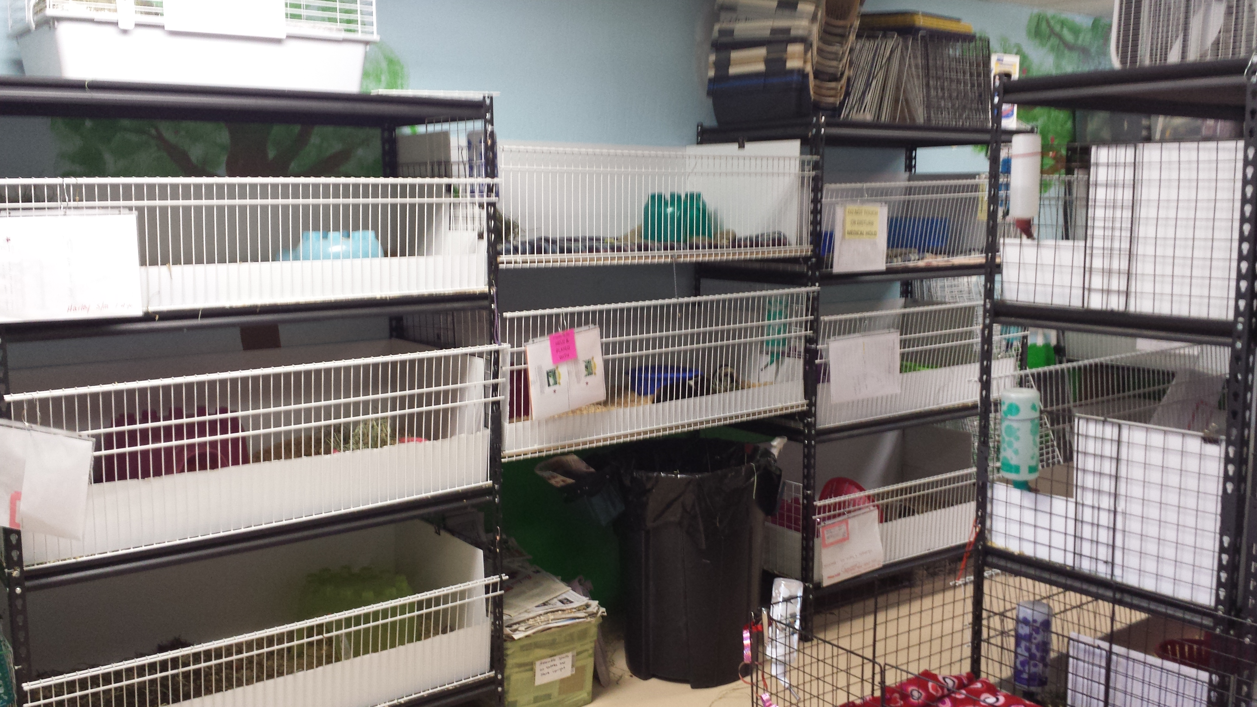 The home to about 40 guinea pigs waiting for their forever families!