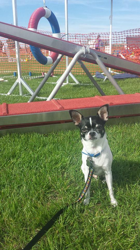 My agility boy!