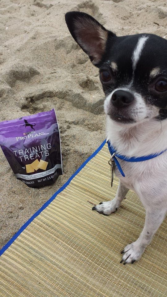 Wynston at Huntington Dog Beach with his ProPlan training treats.