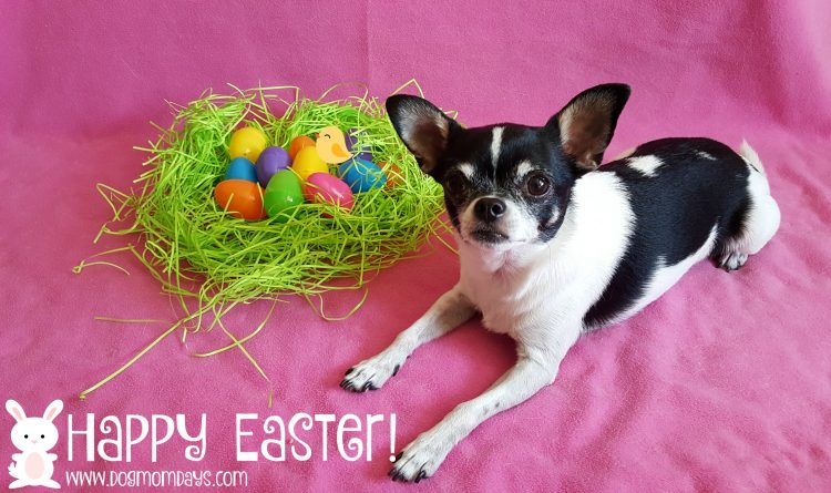 dog friendly Easter