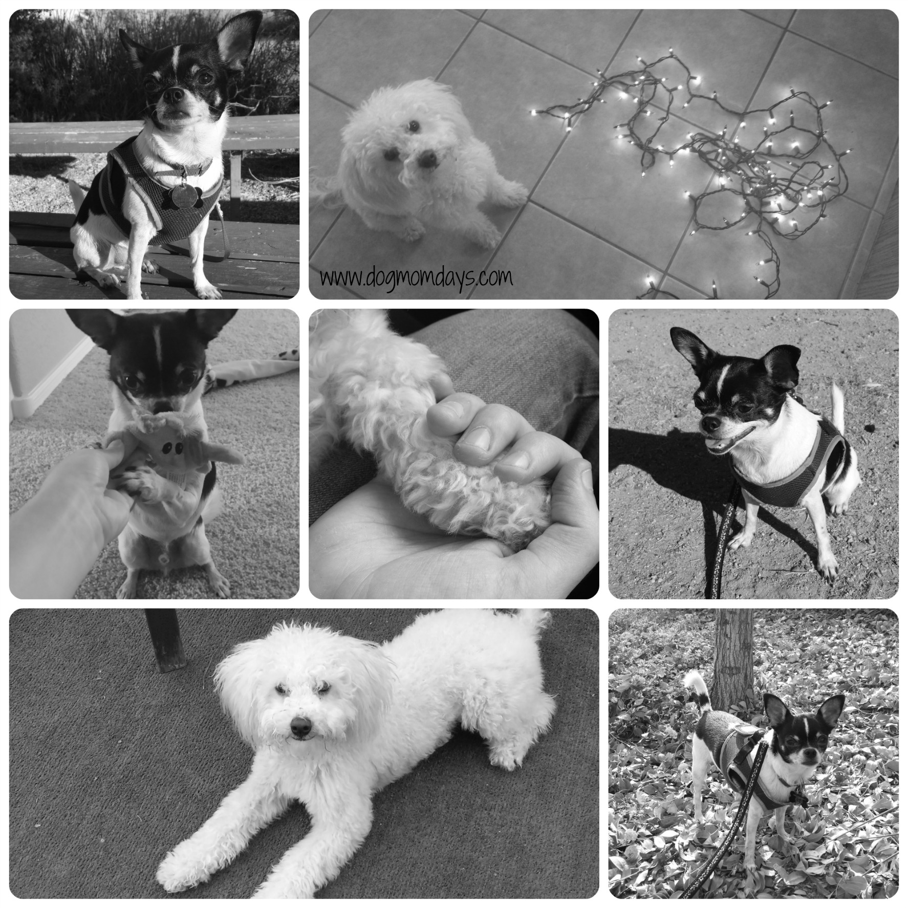 BW dogs