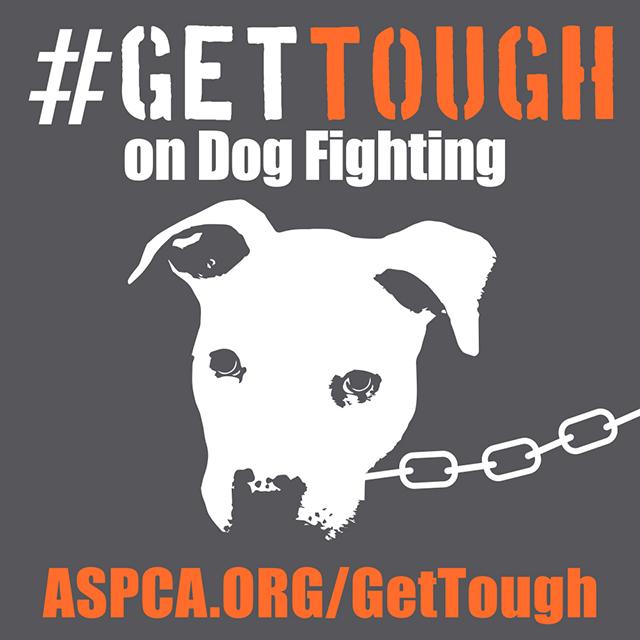 ASPCA dog fighting