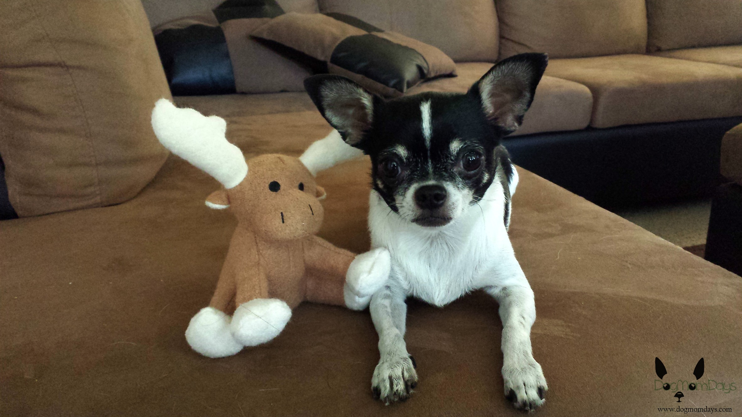 Wynston and his moose.