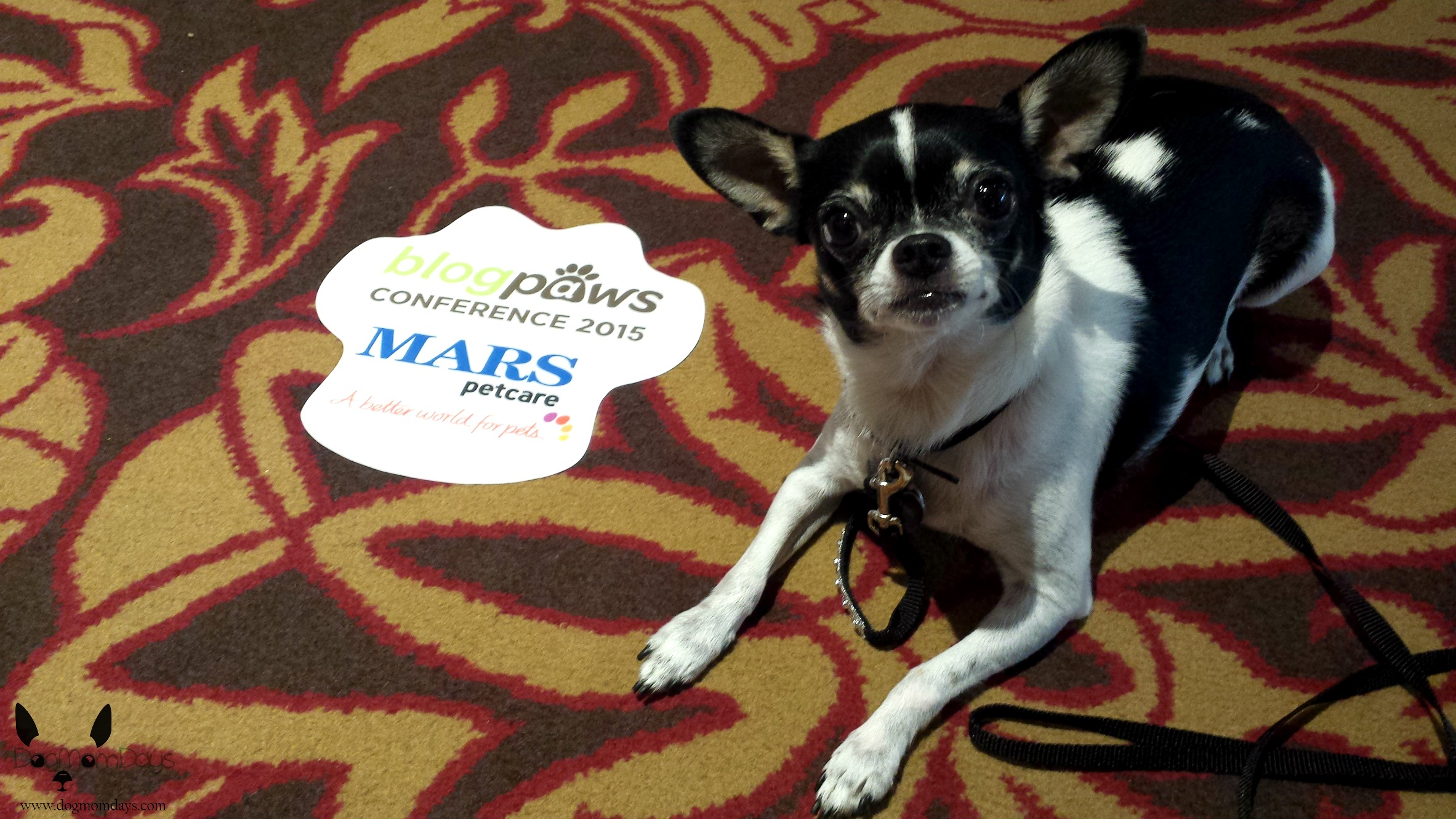 Wynston on the hotel floor next to BlogPaws paw prints!