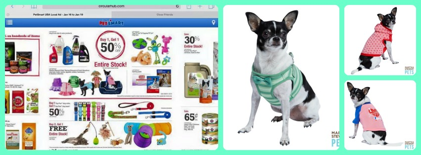 Wynston modeling for Martha Stewart Pets and in an ad for PetSmart.