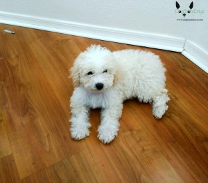 Purina Puppyhood