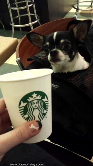 Starbucks Puppucino