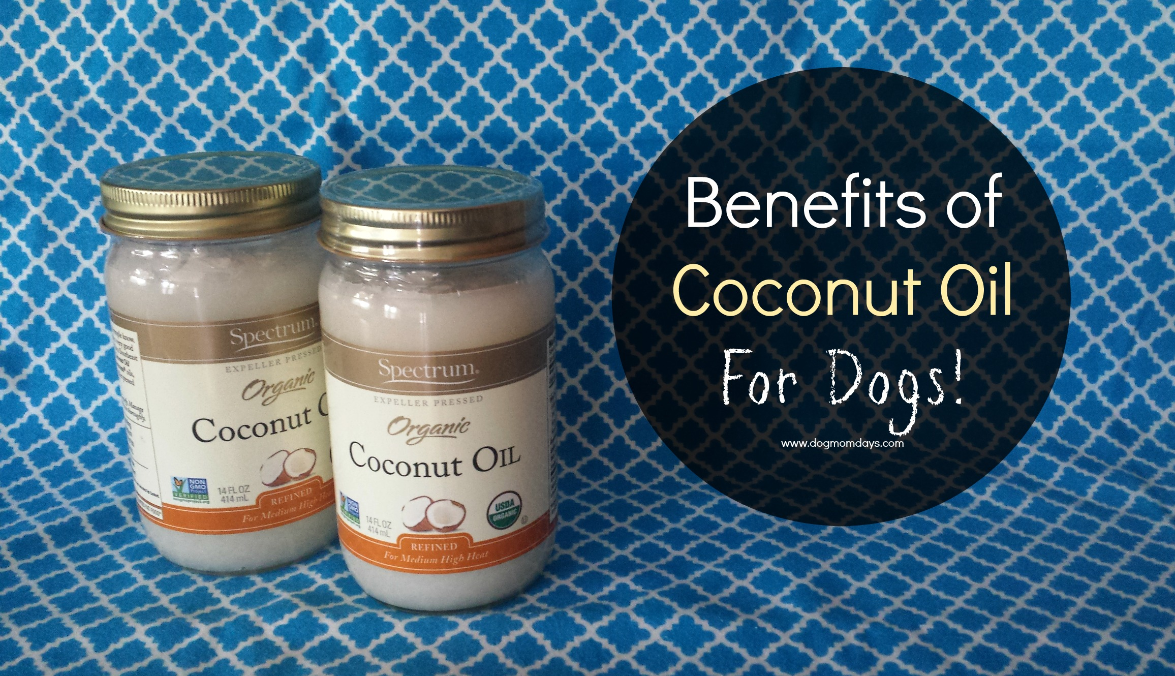 Coconut Oil for Dogs: What's all of this hype about?!