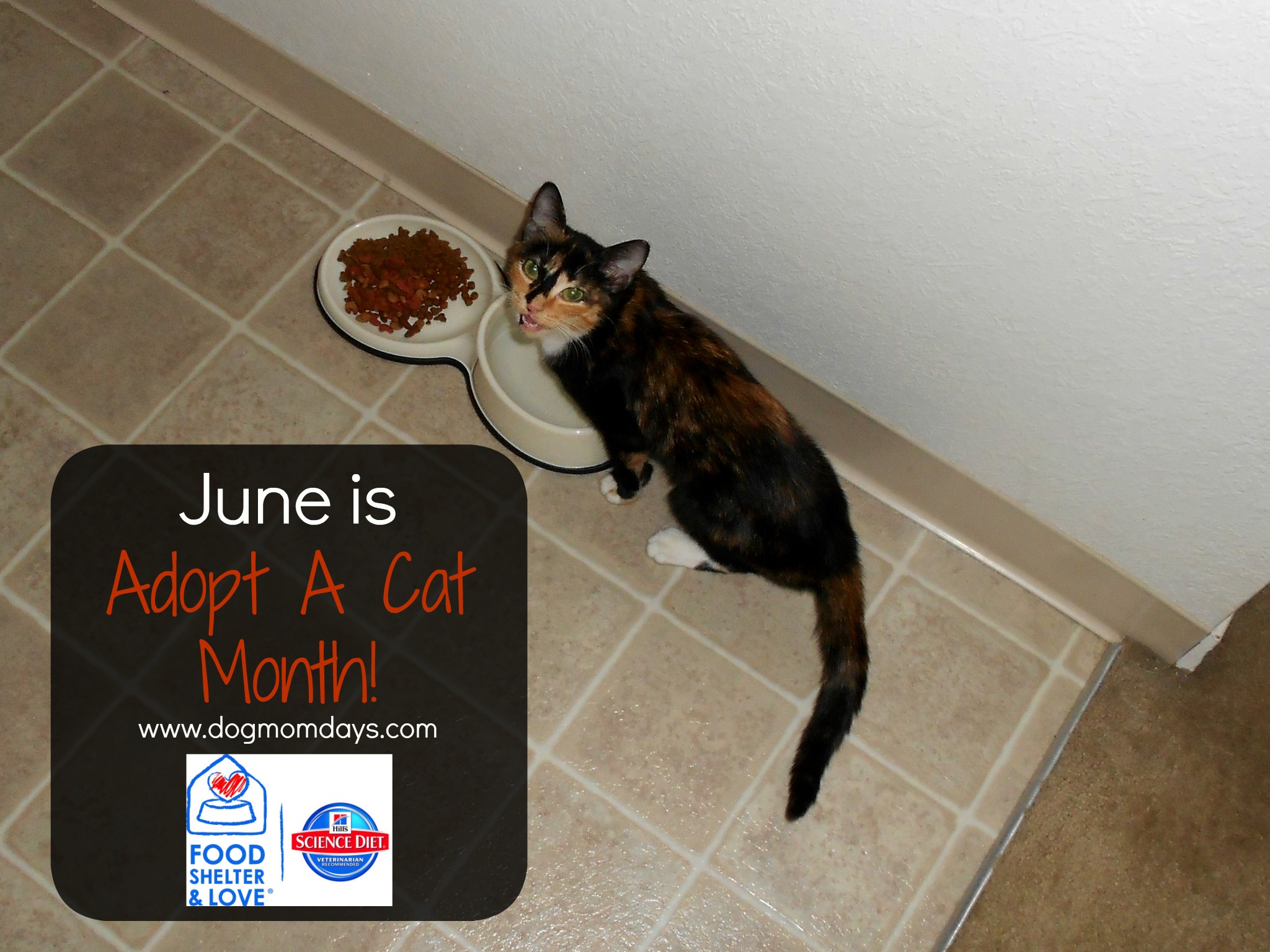 Hill's Science Diet Adopt a cat month