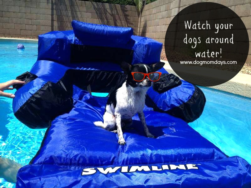dog pool safety