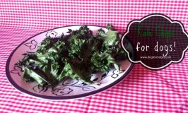 Recipe: Kale Chips For Dogs
