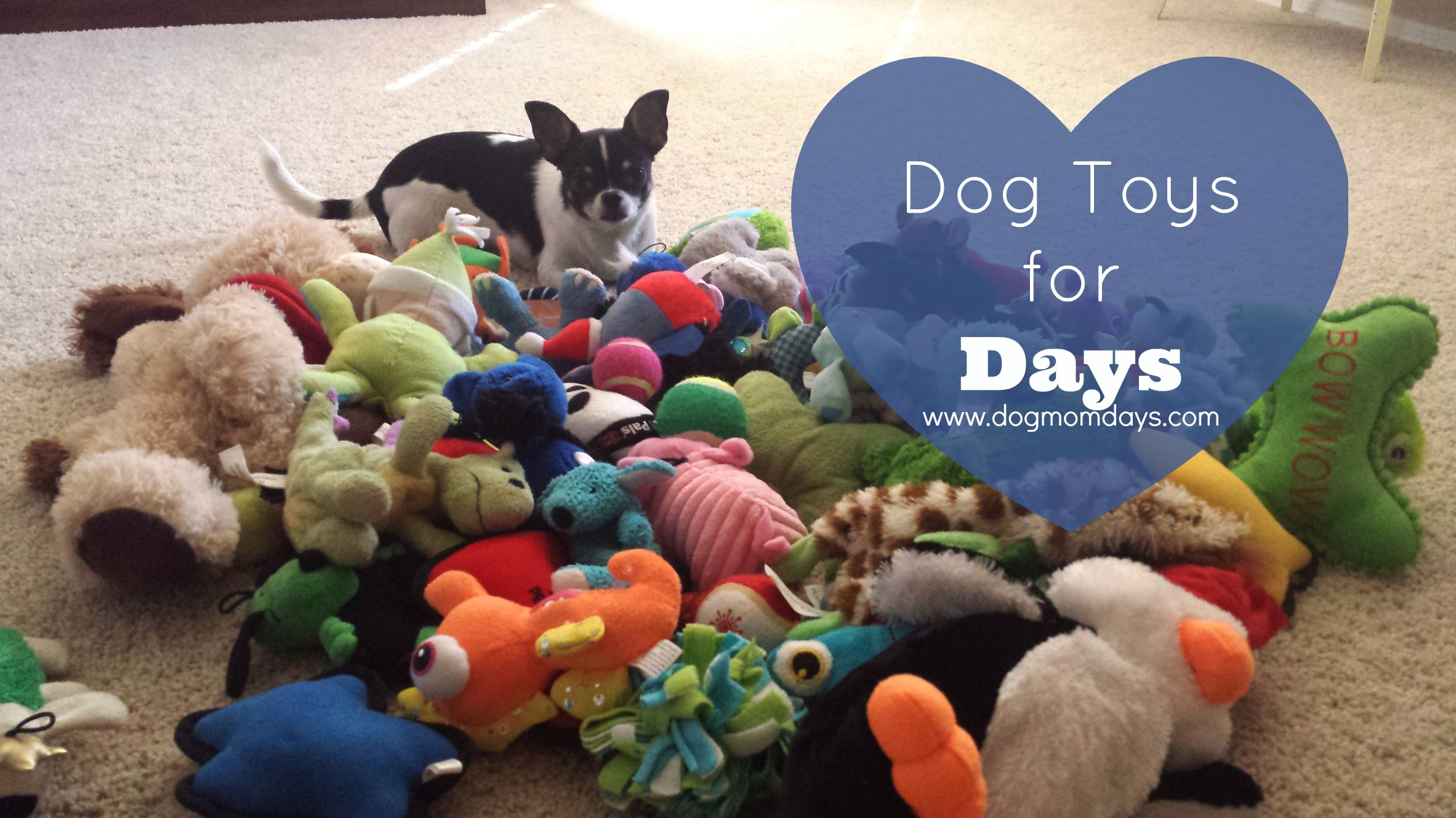 pile of dog toys