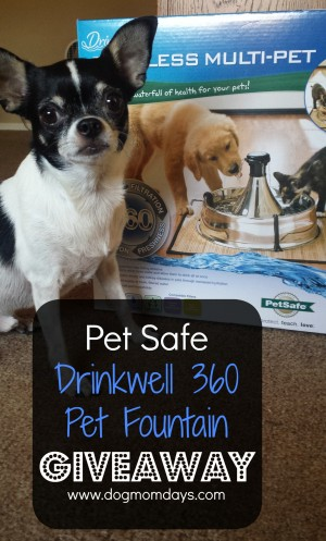 Drinkwell pet fountain giveaway