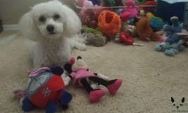 Dog Toys: Playing Favorites
