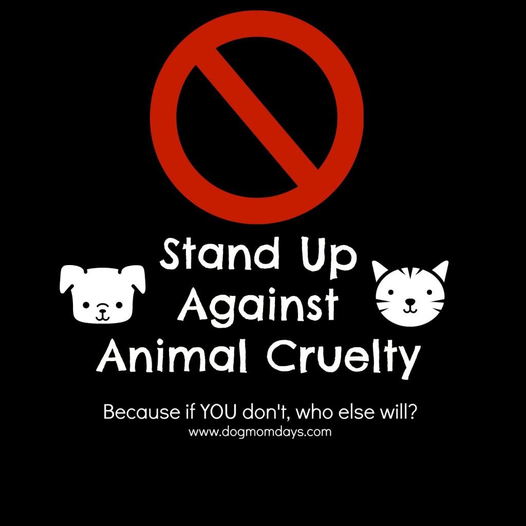 animal cruetly