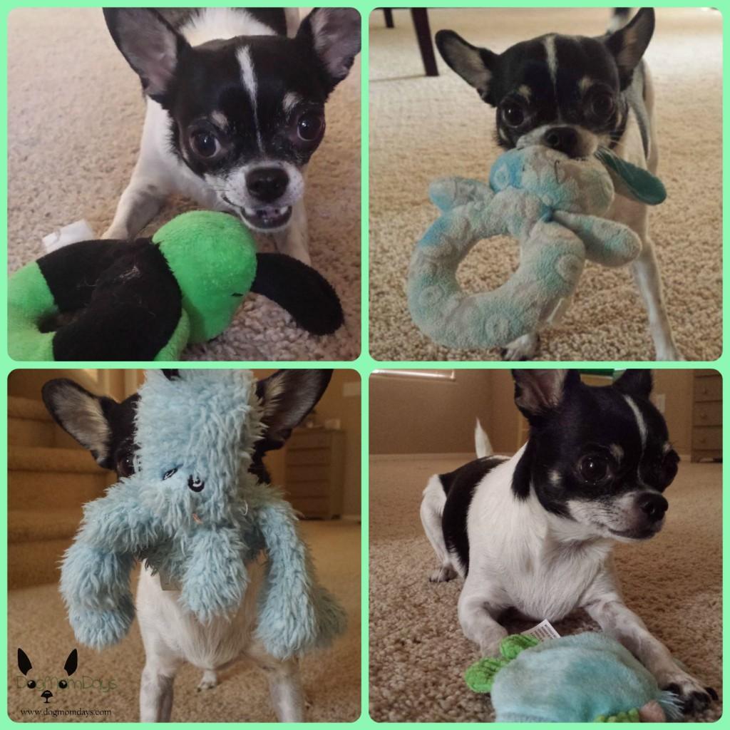 Chihuahua dog toys