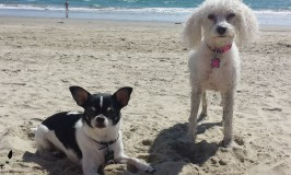Huntington Dog Beach: Our California Adventures