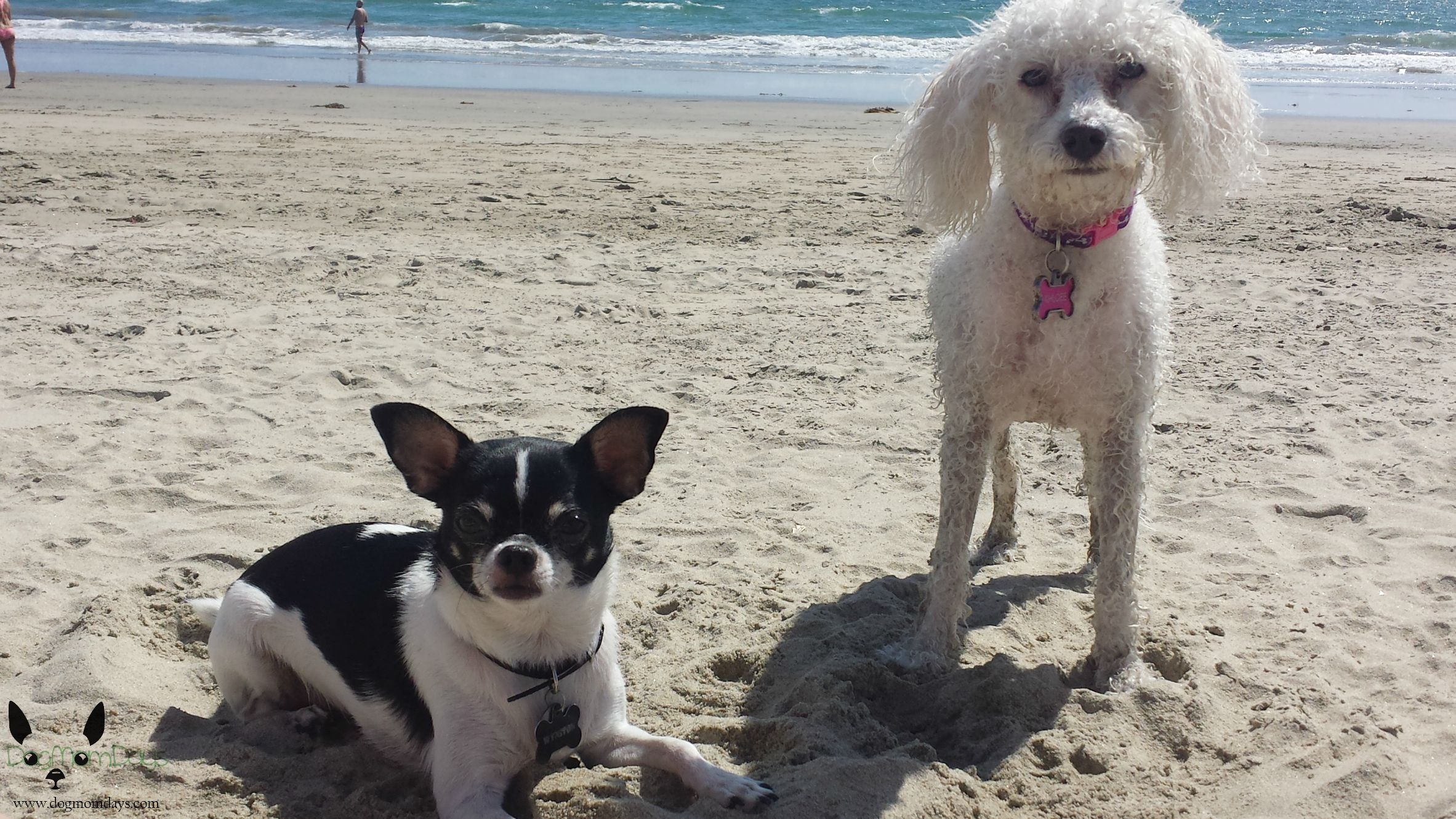 Huntinton Dog Beach