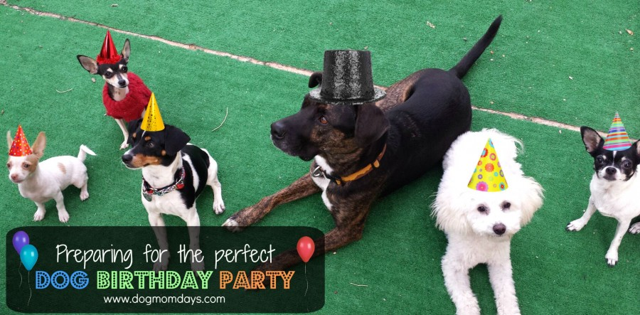preparing for the perfect dog birthday party