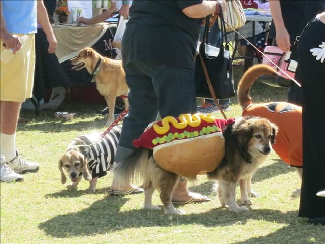 Dogtoberfest