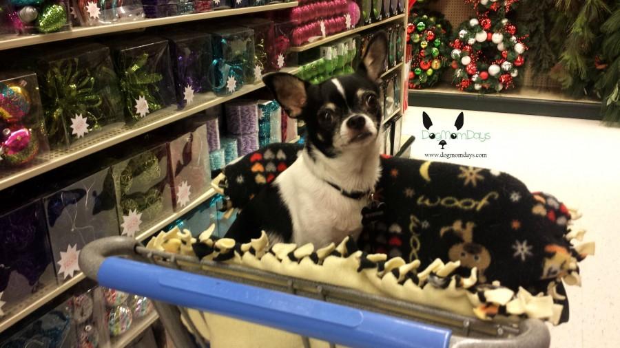dog friendly Hobby Lobby