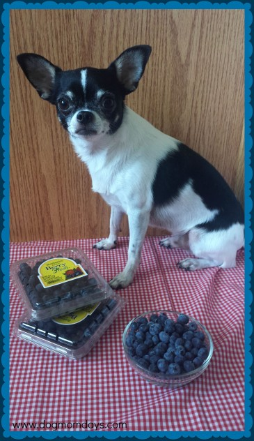 Dogs can eat blueberries!