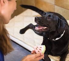 rescue dog PetSmart model