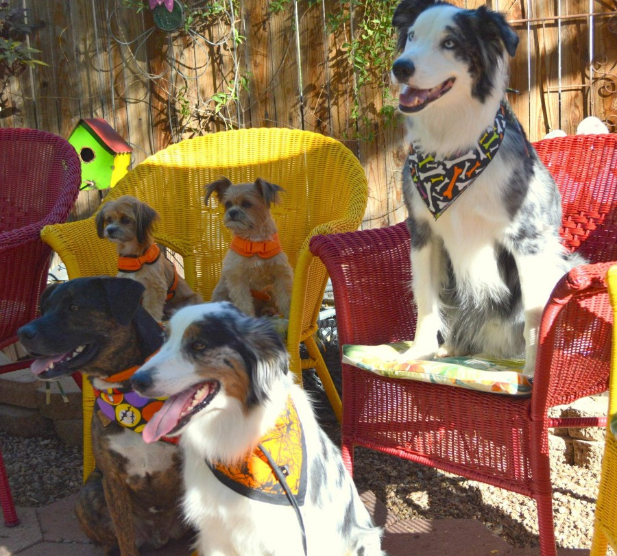 Wynston's friends at Bergies this morning, courtesy of Kerri Irwin - find her on Instagram @goose_the_aussie!