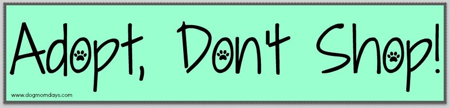 adopt. don't shop
