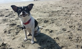 Our October Trip to Huntington Dog Beach