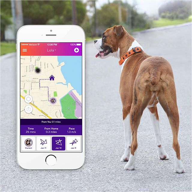 The Nuzzle Smart GPS Collar