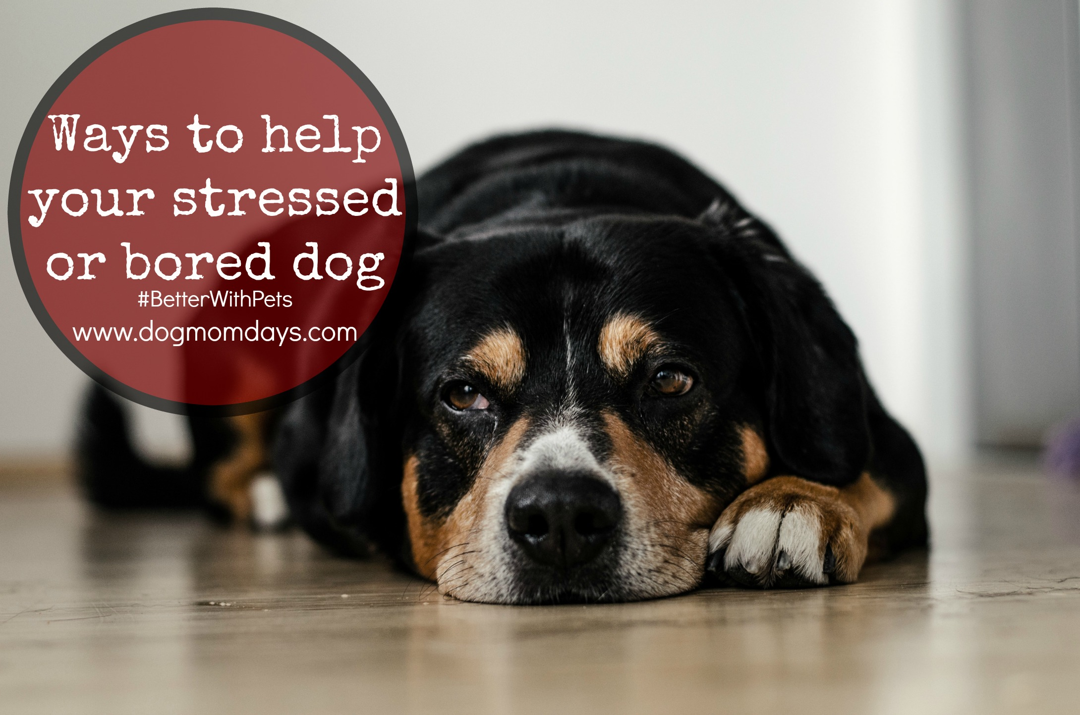 ways to help your bored or stressed dog