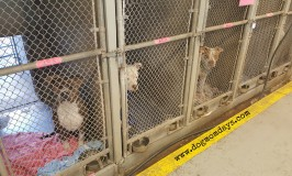 My Day at the County Animal Shelter – MCACC
