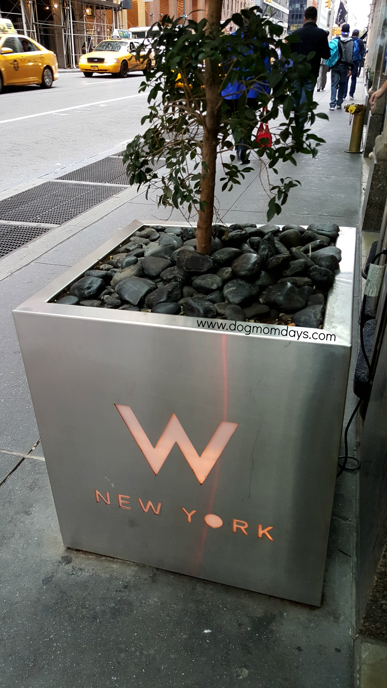 The W Hotel New York