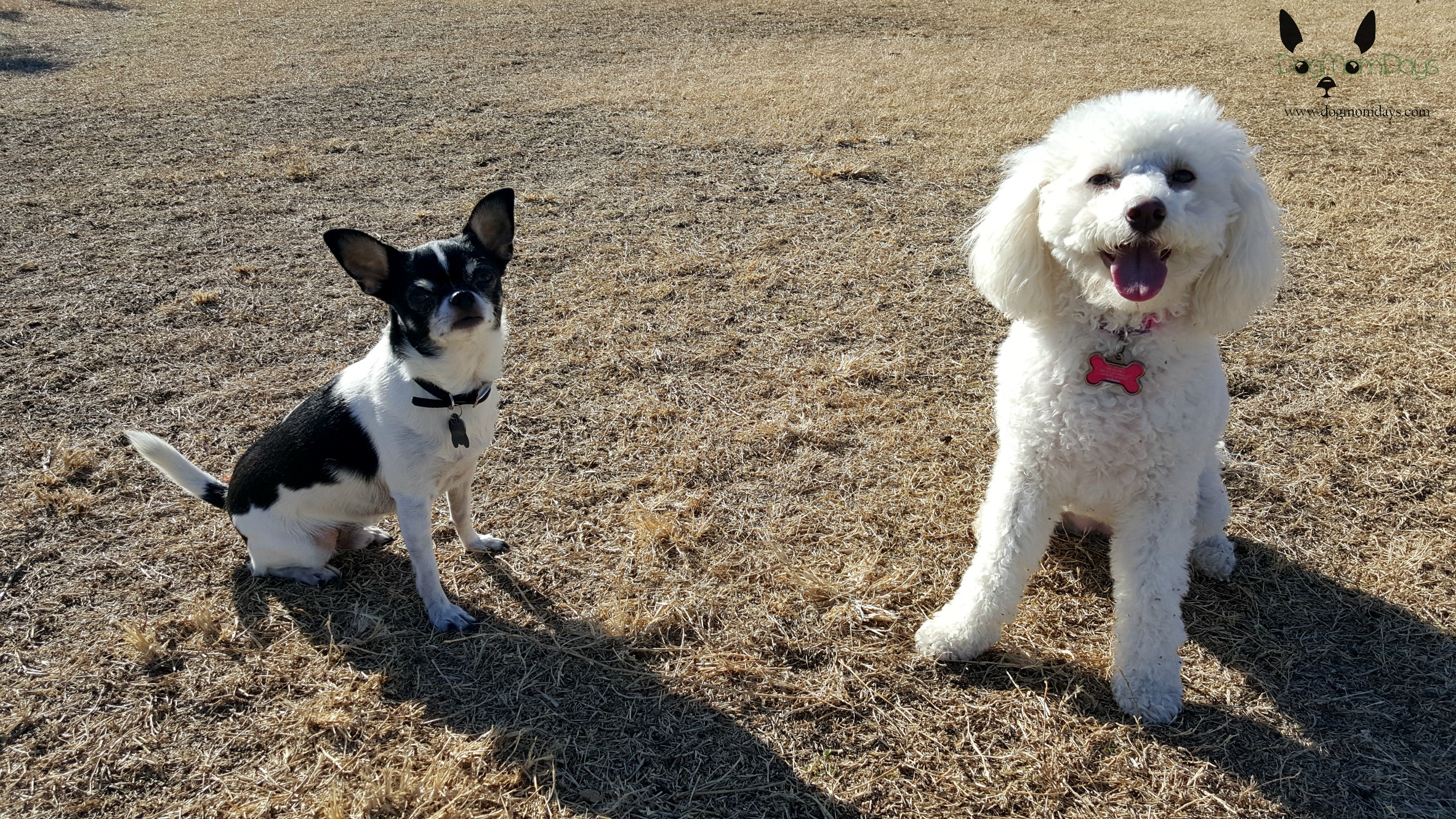 day at the dog park
