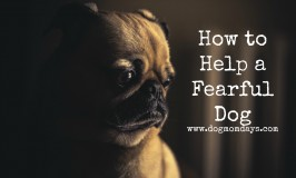 how to help a fearful dog