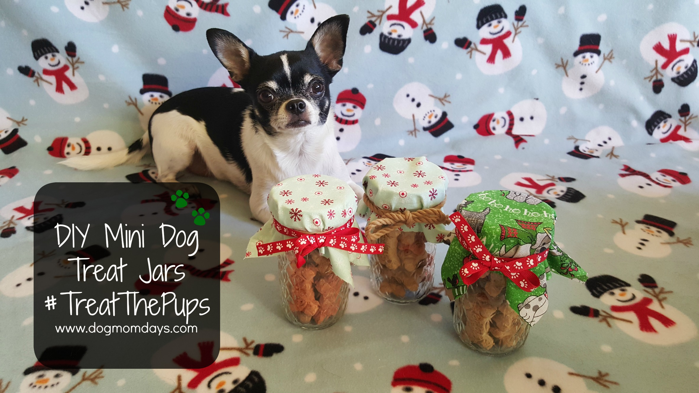 DIY Mini Dog Treat Jars