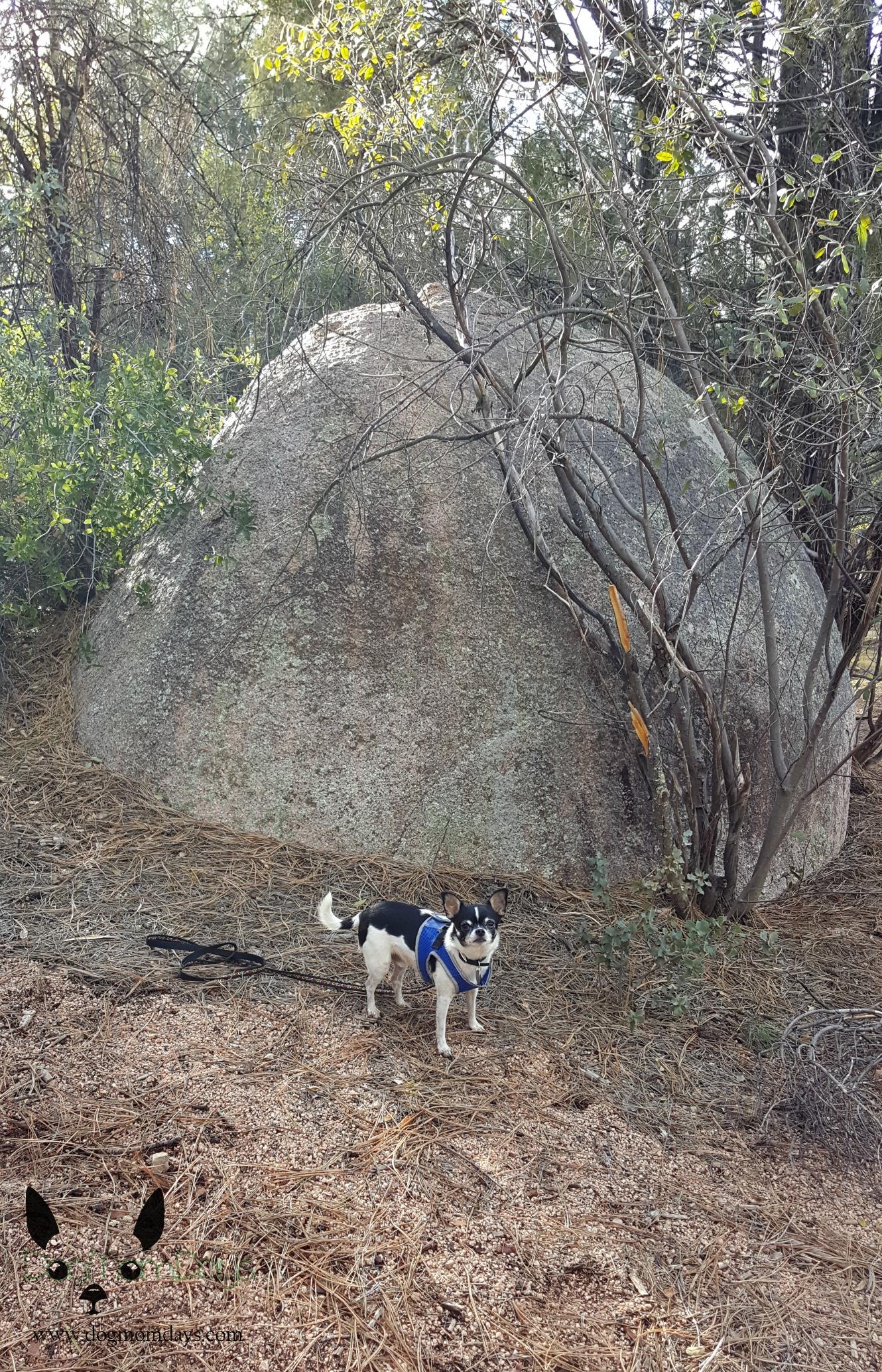 Monument Peak trail