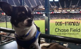 Dog-friendly Chase Field