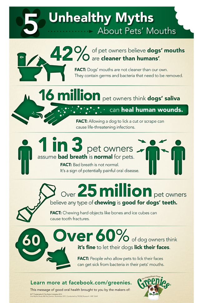 pet dental health facts