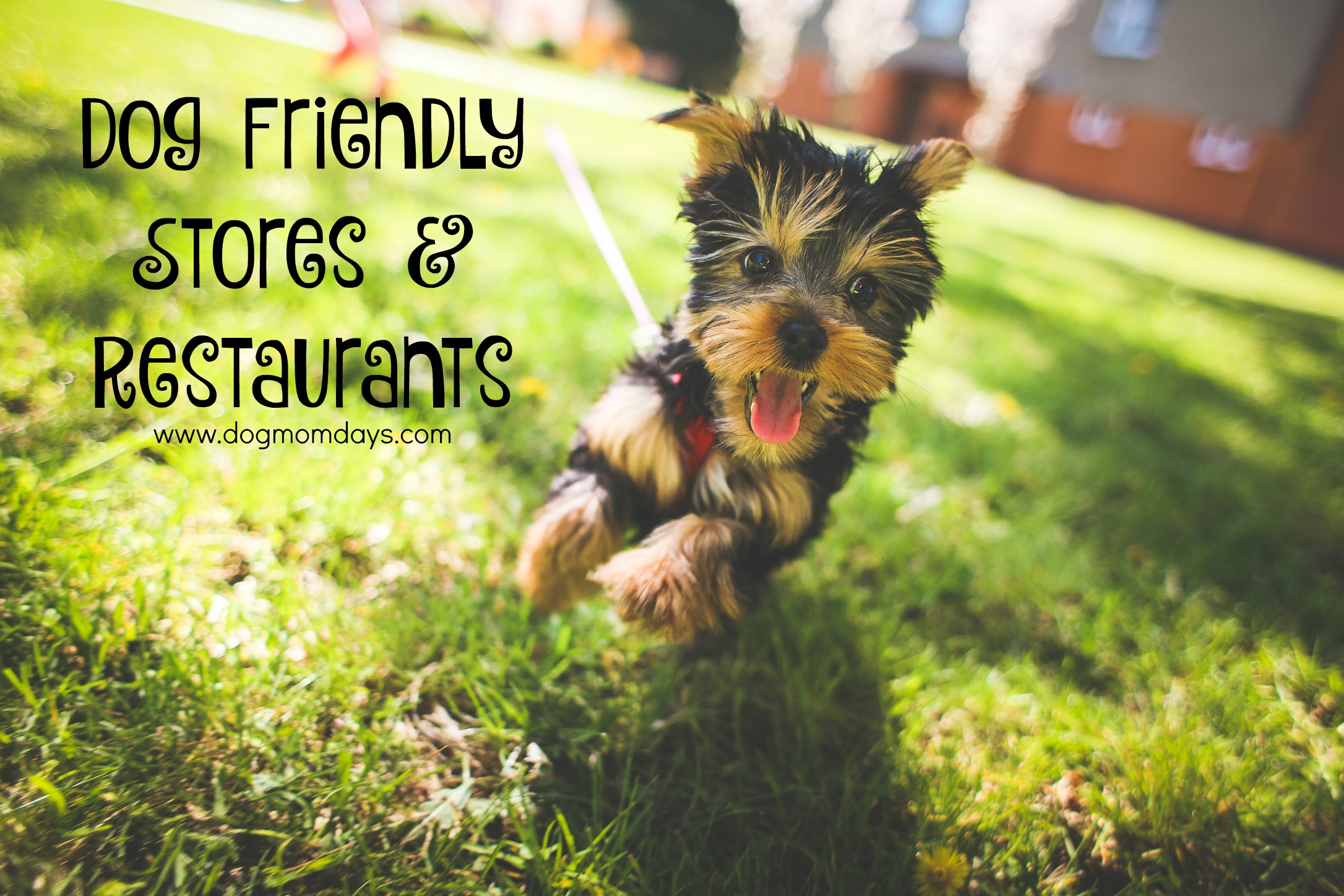 dog friendly stores and restaurants