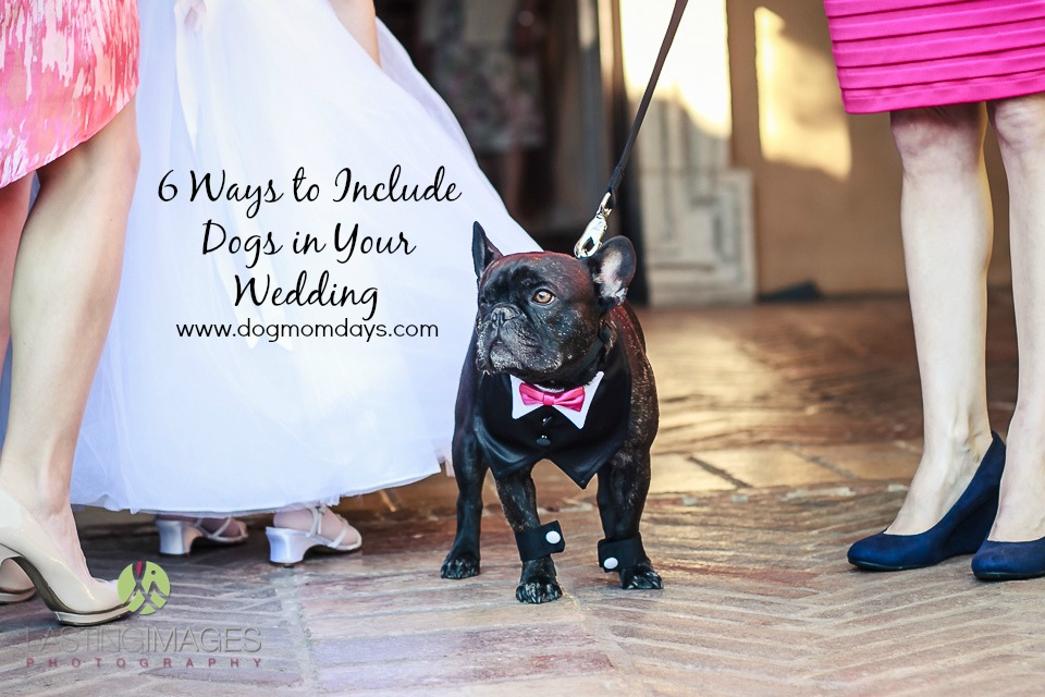 Villa Siena wedding with dogs