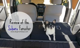 My New Dog Mom Mobile: The Subaru Forester