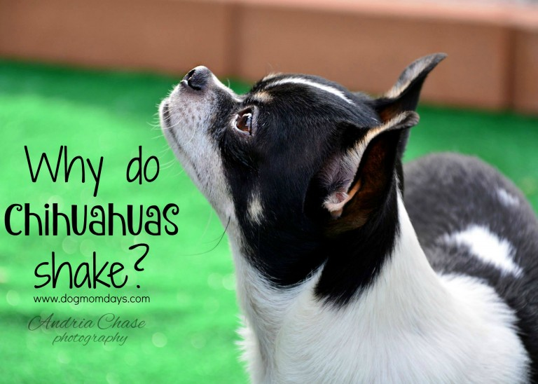 Why Do Rescue Dogs Shake