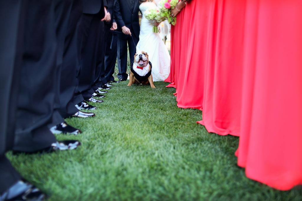 Villa Siena dog friendly wedding