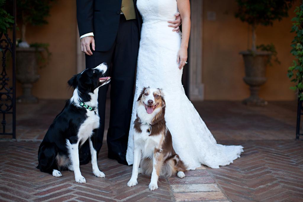 dogs allowed at Villa Siena