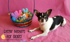 How to Put Together an Easter Basket for Your Dog!