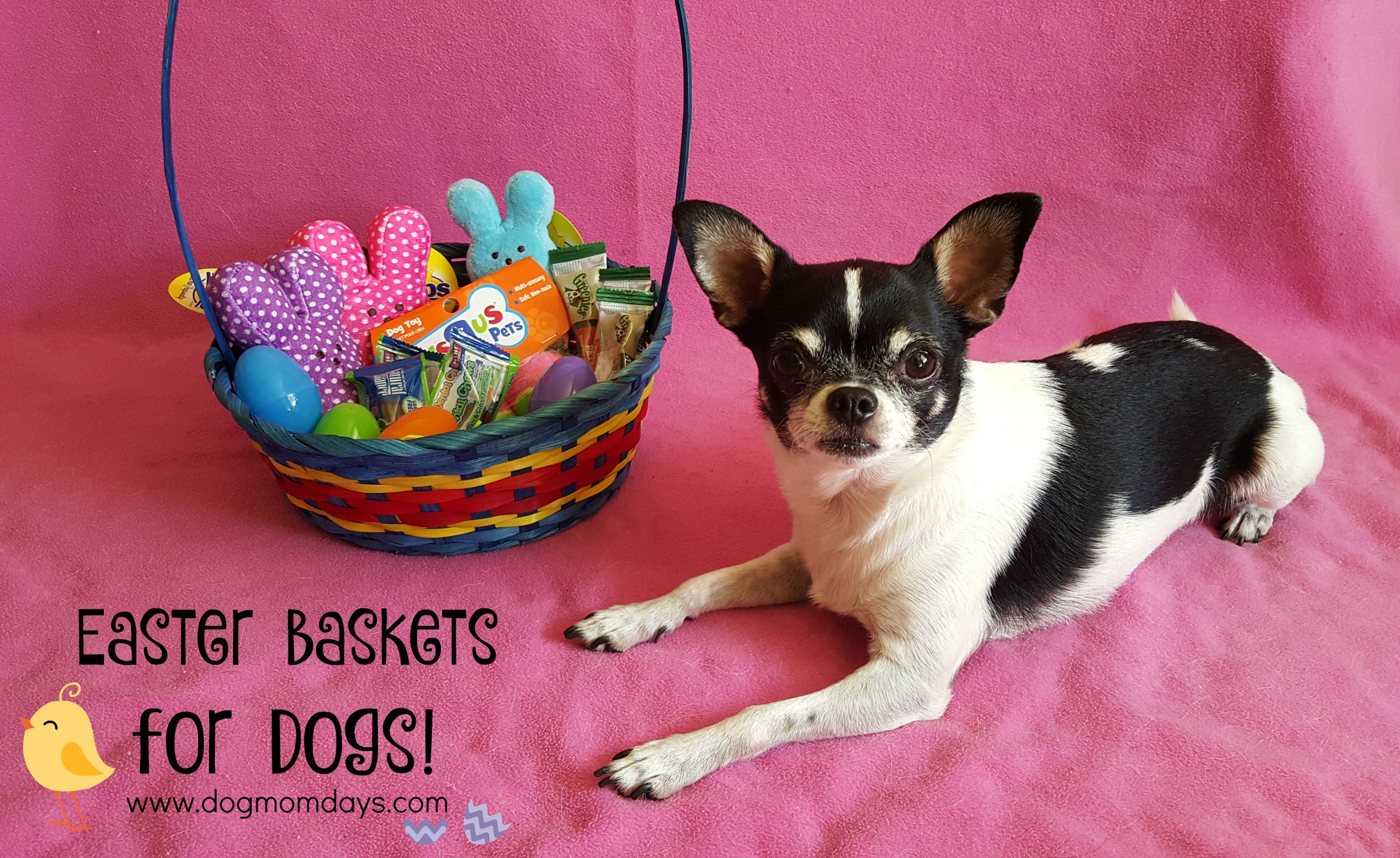 How to put together an Easter basket for your dog